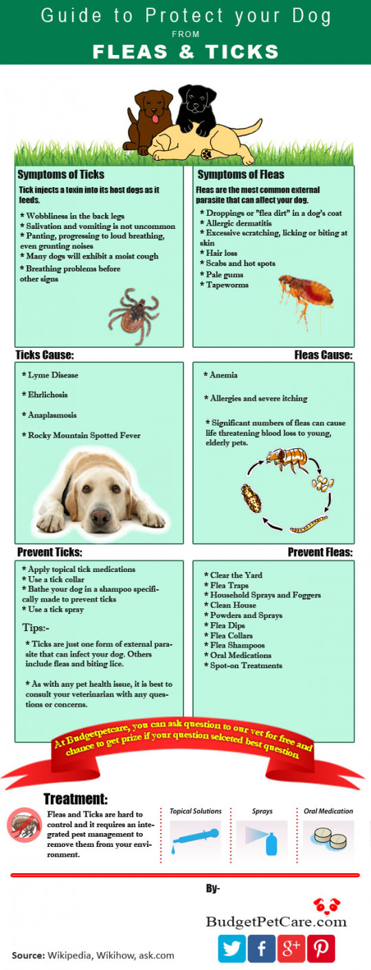 Guide to Protect your dog from Fleas and Ticks