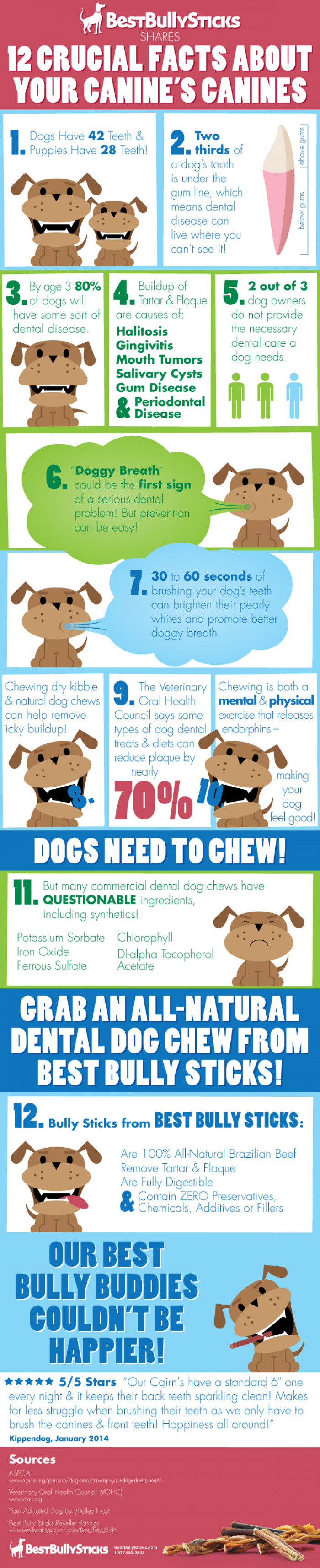 12 Crucial Facts About Your Canine