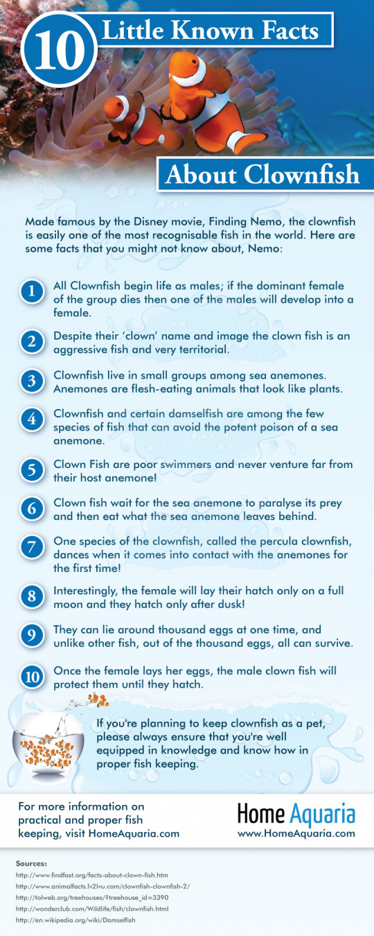10 Little Known Facts About Clownfish