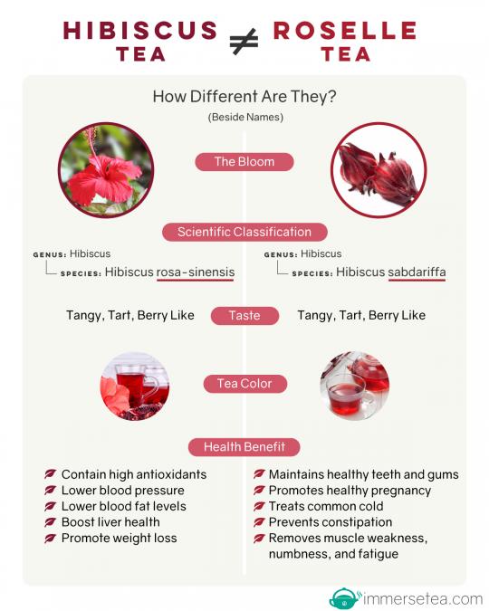 Hibiscus Tea VS Roselle Tea (infographic)