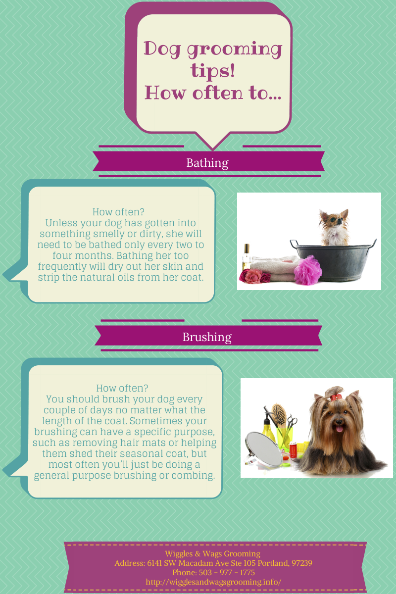 Dog Grooming Tips!