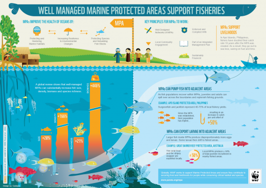 Well Managed Marine Protected Areas Support Fisheries