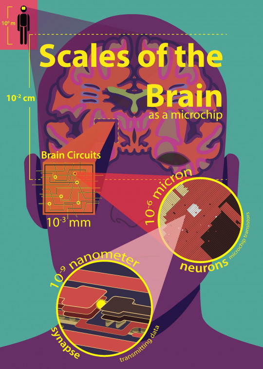 Scales of the Brain