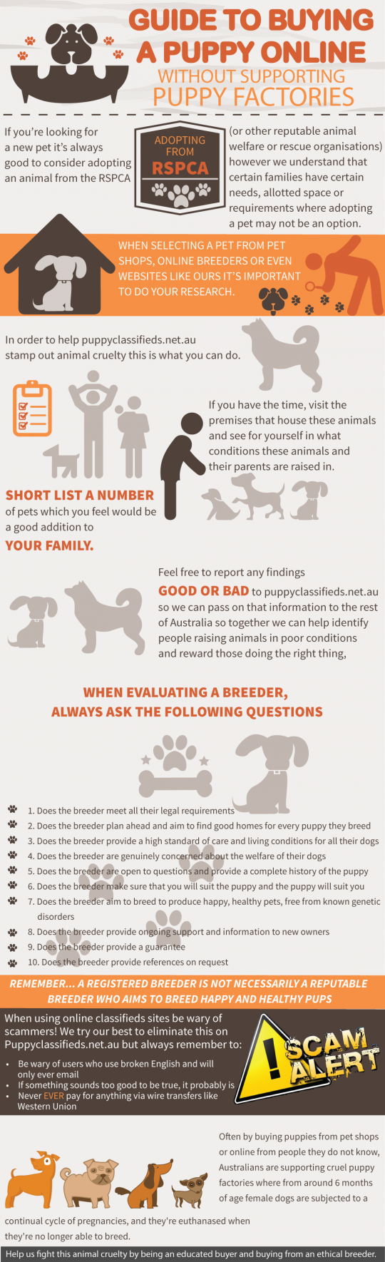 Guide to Buying a Puppy Online Without Support Puppy Factories