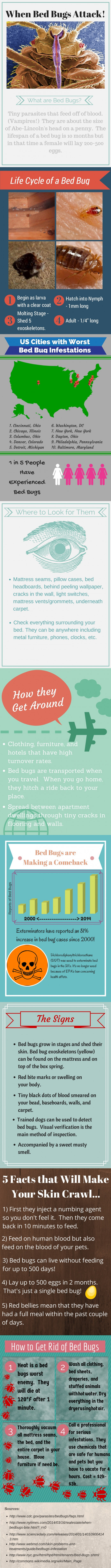 When Bed Bugs Attack! I Bed Bug Infographic