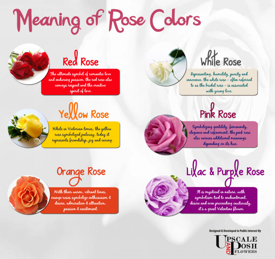Beautiful different color roses hot girls wallpaper for Meaning of flower colors