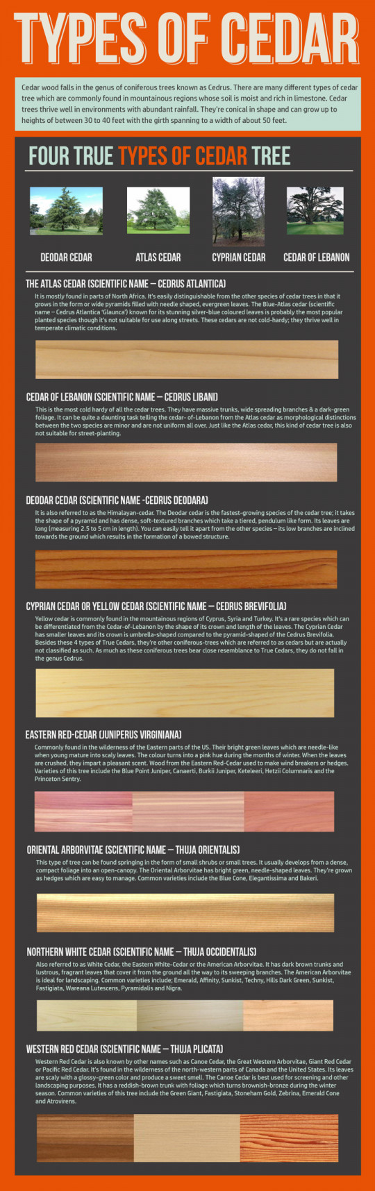 Different Types of Cedar Infographic