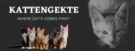 Kattengekte - Where cats comes first