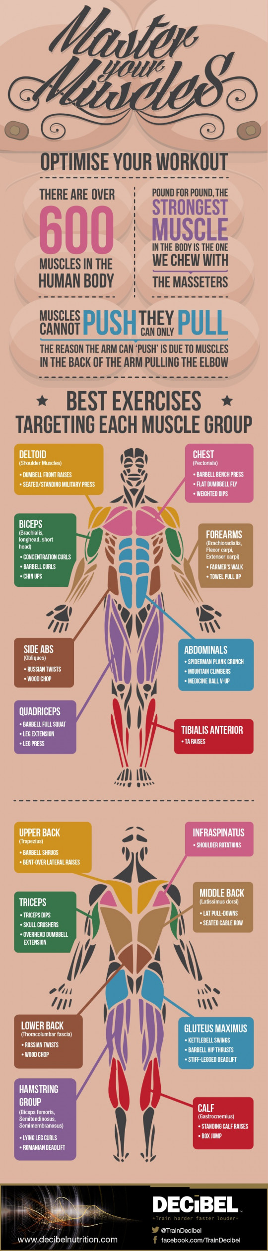 Master Your Muscles: Optimise Your Workout