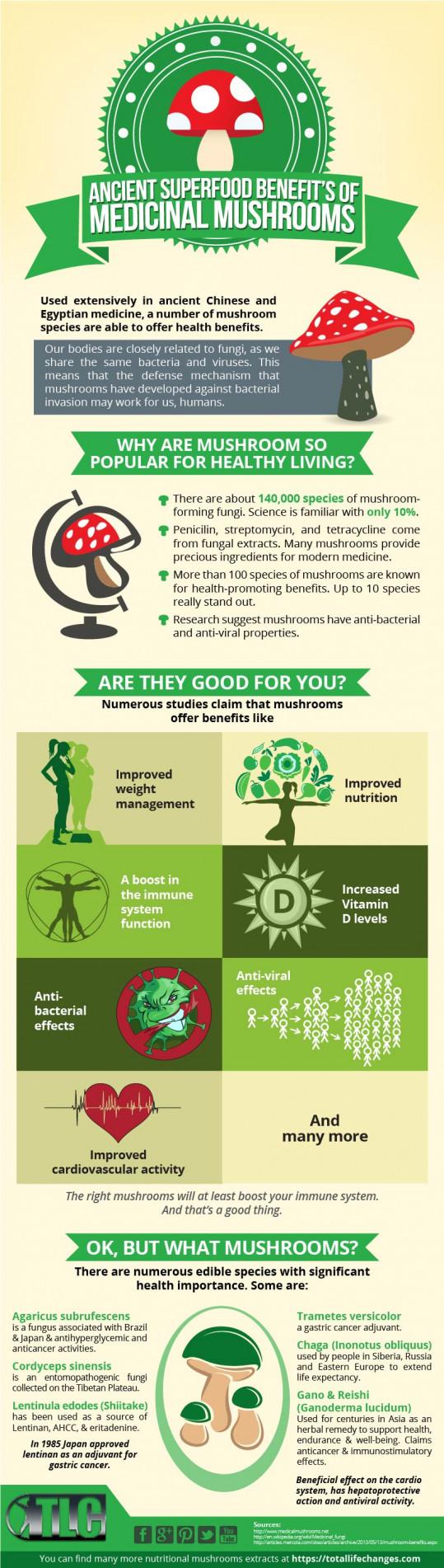 The Ancient Superfood Benefits of Medicinal Mushrooms