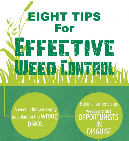 Eight Tips For Effective Weed Control
