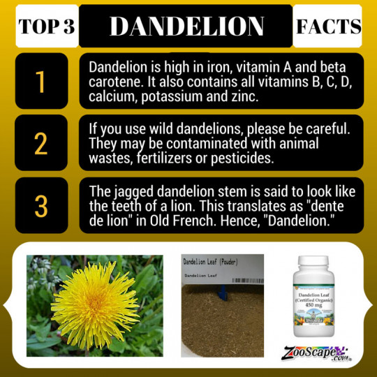 Strawberry, Orange and Dandelion Smoothie; Top 3 Facts about Dandelion
