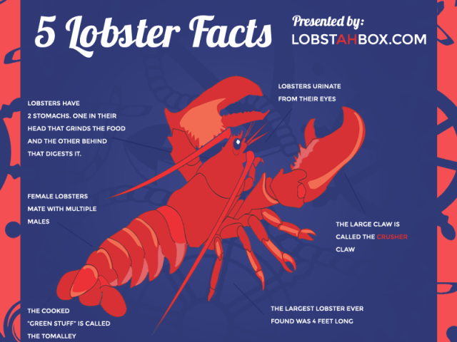 Five Lobster Facts