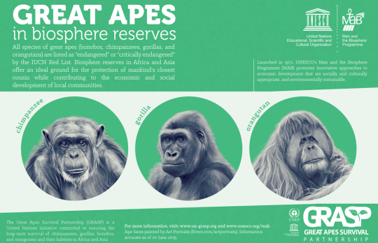 Great Apes Emphasize Importance of Biosphere Reserves