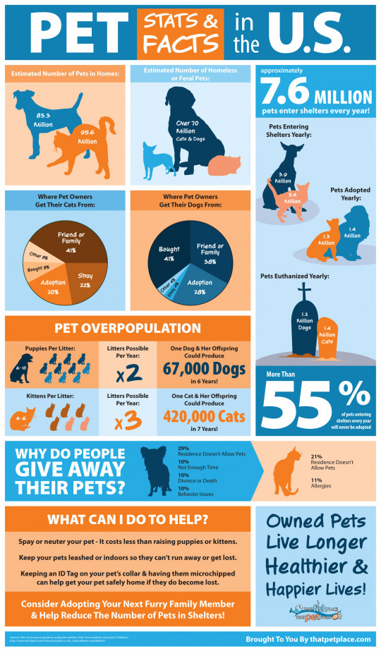 Pet Abandonment Aid Animals