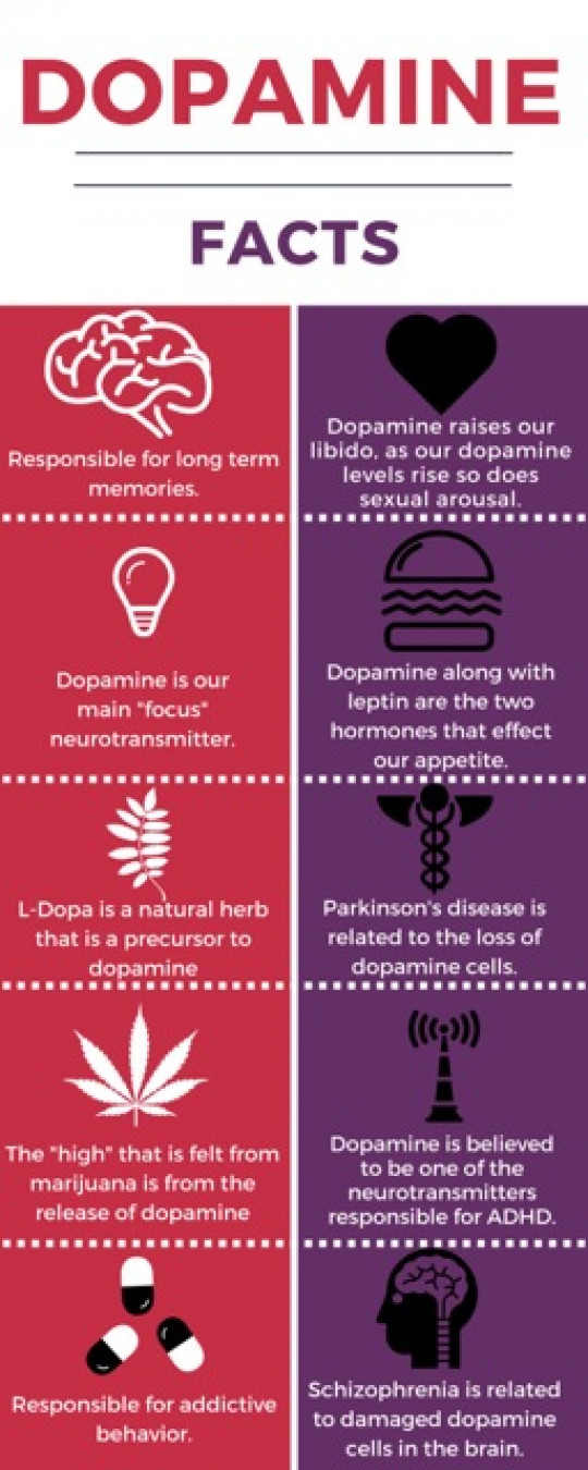 Dopamine facts Infographic