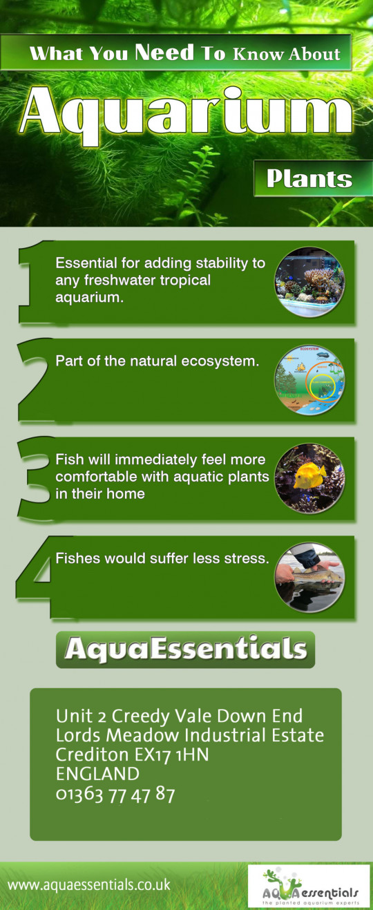 What You Need To Know About Aquarium Plants