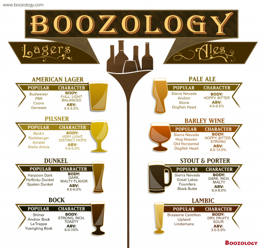 Different Types Of Beer (Beer 101)