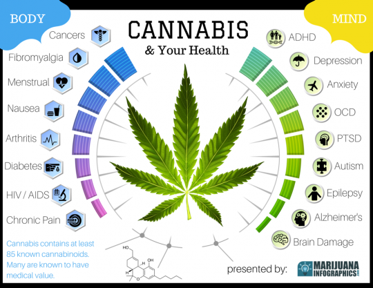 Cannabis and Your Health