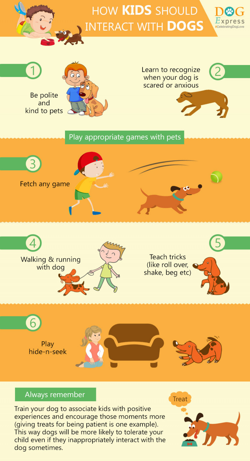 323774? w=800 - 4 Benefits of Having Pets at Daycare Centers