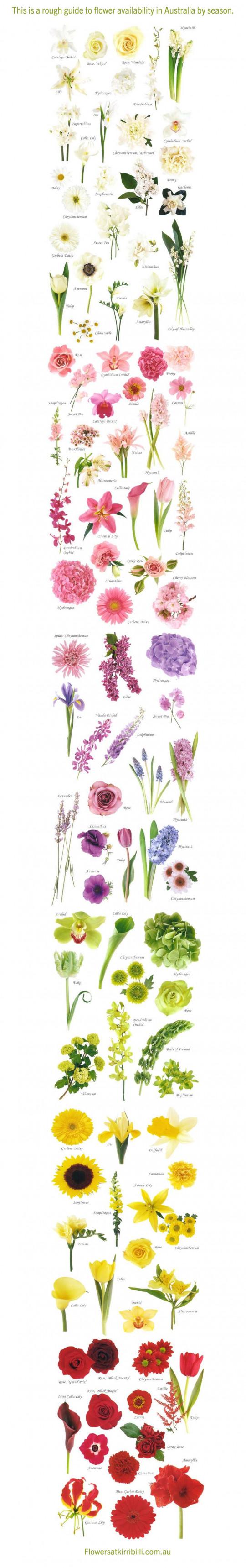 Seasonal flowers in Australia- A rough Guide!