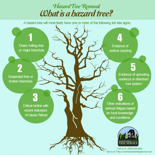 Hazard Tree Removal : What is a hazard tree?