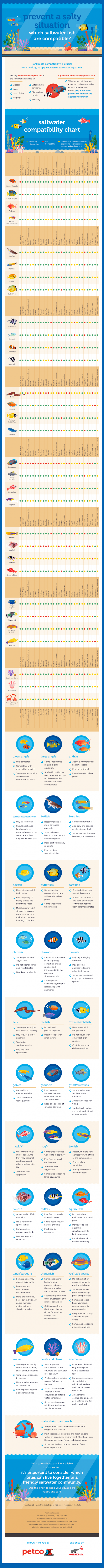 Prevent a Salty Situation: Which Saltwater Fish Are Compatible?
