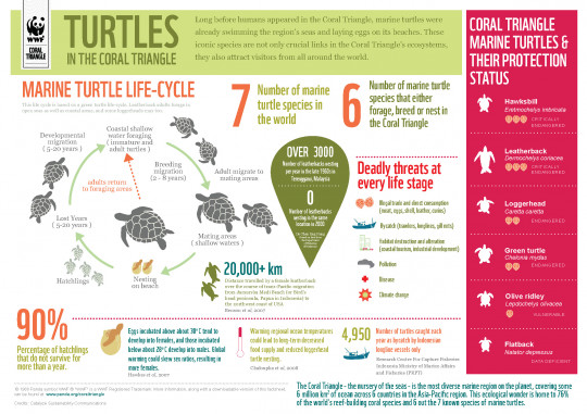 Marine Turtles in the Coral Triangle