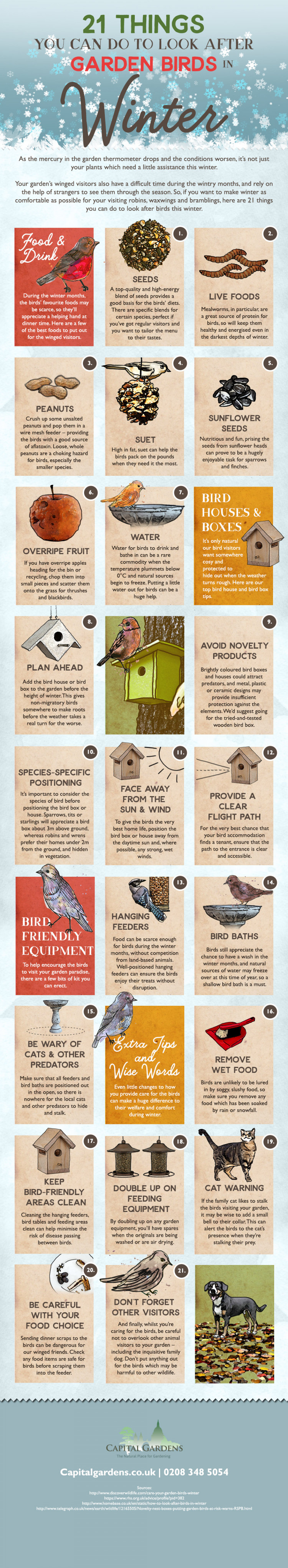 21 Things You Can Do to Look After Garden Birds in Winter