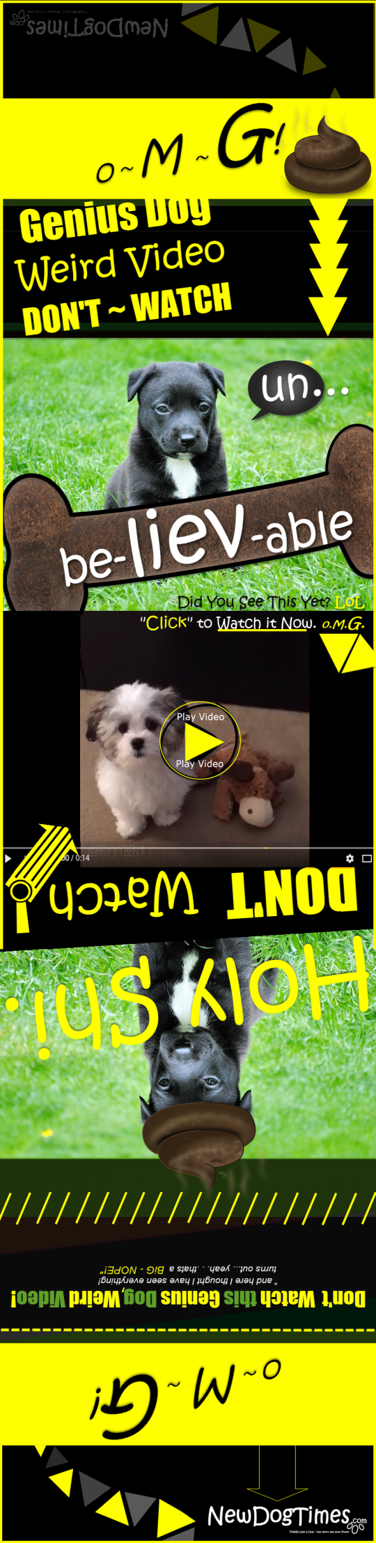 Funny Dog Video Infographic