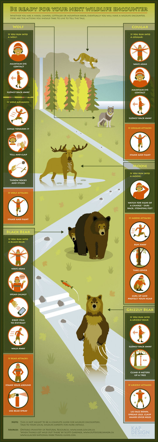 Be Ready For Your Next Wildlife Encounter