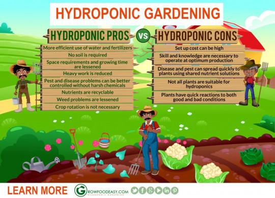 Hydroponic Gardening Pros vs Cons