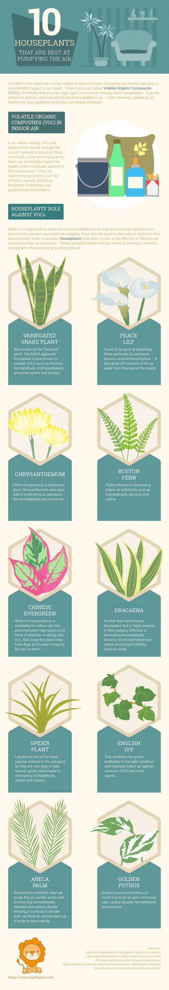 Top 10 Houseplants for Purifying the Air