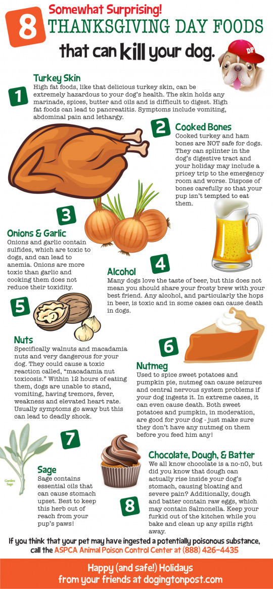 8 Thanksgiving Day Foods That Can Kill your Dog