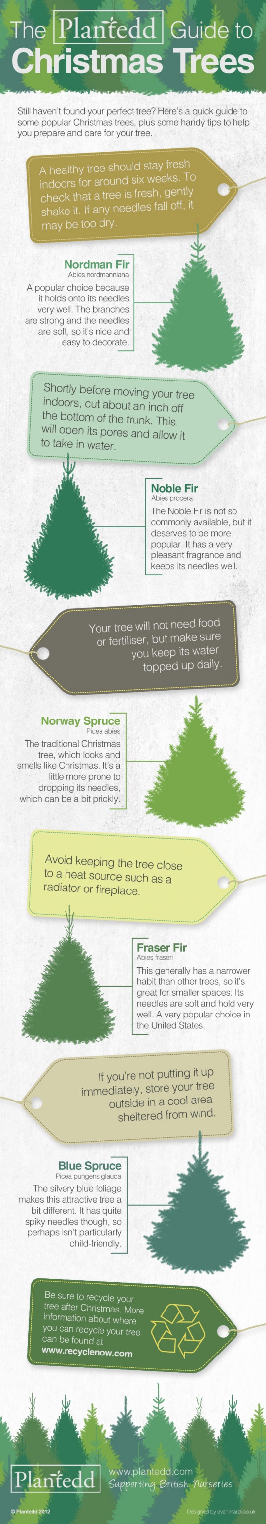 A guide to real Christmas trees