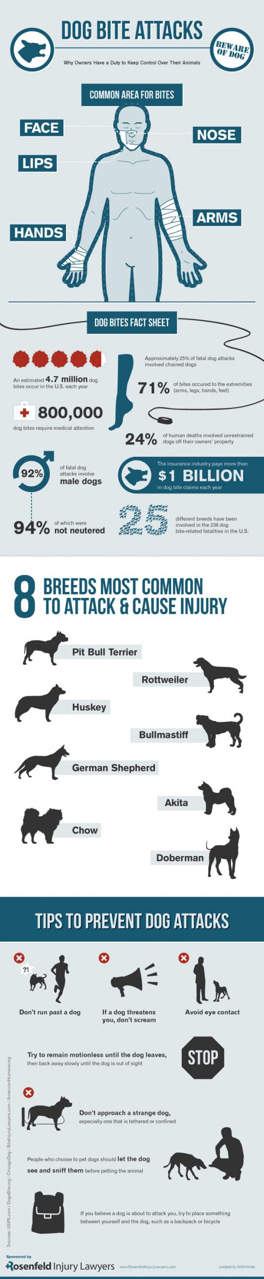 Dog Bite Attacks
