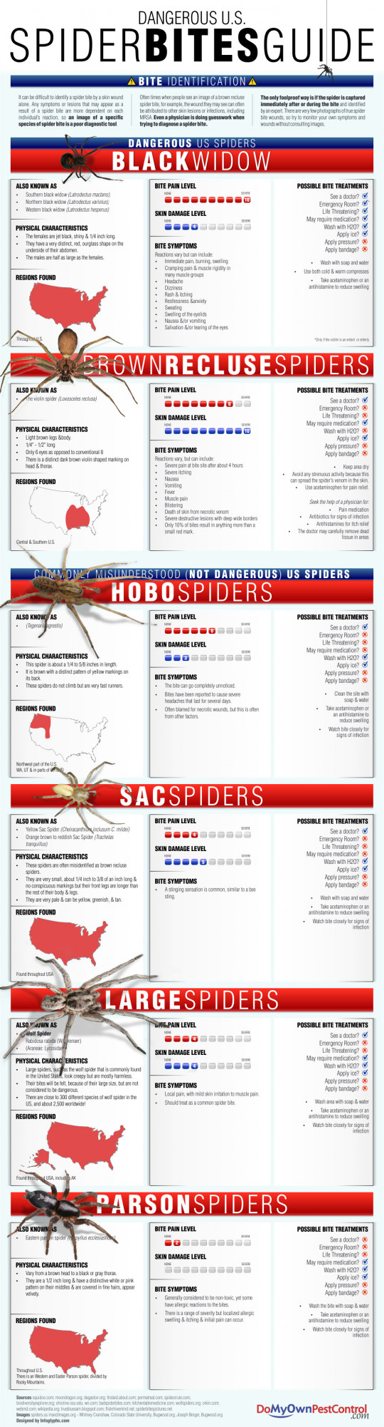 Dangerous U.S. Spider Bites Guide
