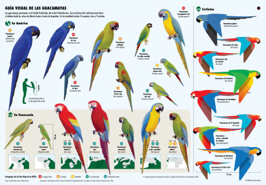 Macaws of the World