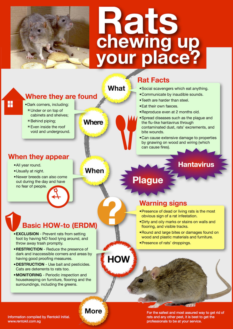 Rats chewing up your place?