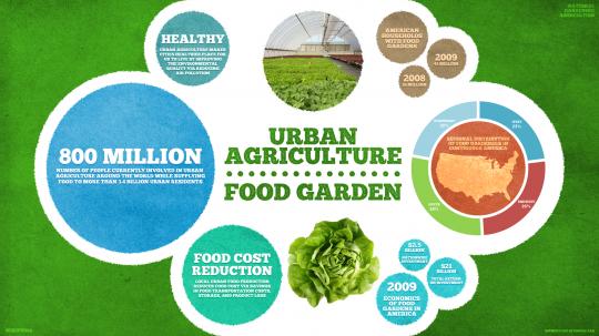 Urban farming and urban food garden