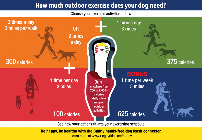 How Much Outdoor Exercise Does Your Dog Need?