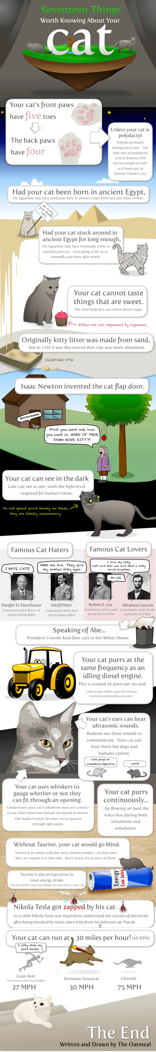 17 Things Worth Knowing About your Cat